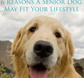 Seven-Reasons-a-Senior-Dog-May-Fit-Your-Life-Main