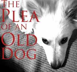 The-Plea-of-an-Old-Dog
