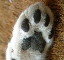 helping-paw