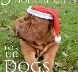 5-Awesome-Holiday-Gifts-for-the-Dogs-in-Your-Life-Cover