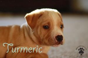 Turmeric - BeausBridgeClub.org