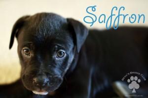 Saffron - BeausBridgeClub.org